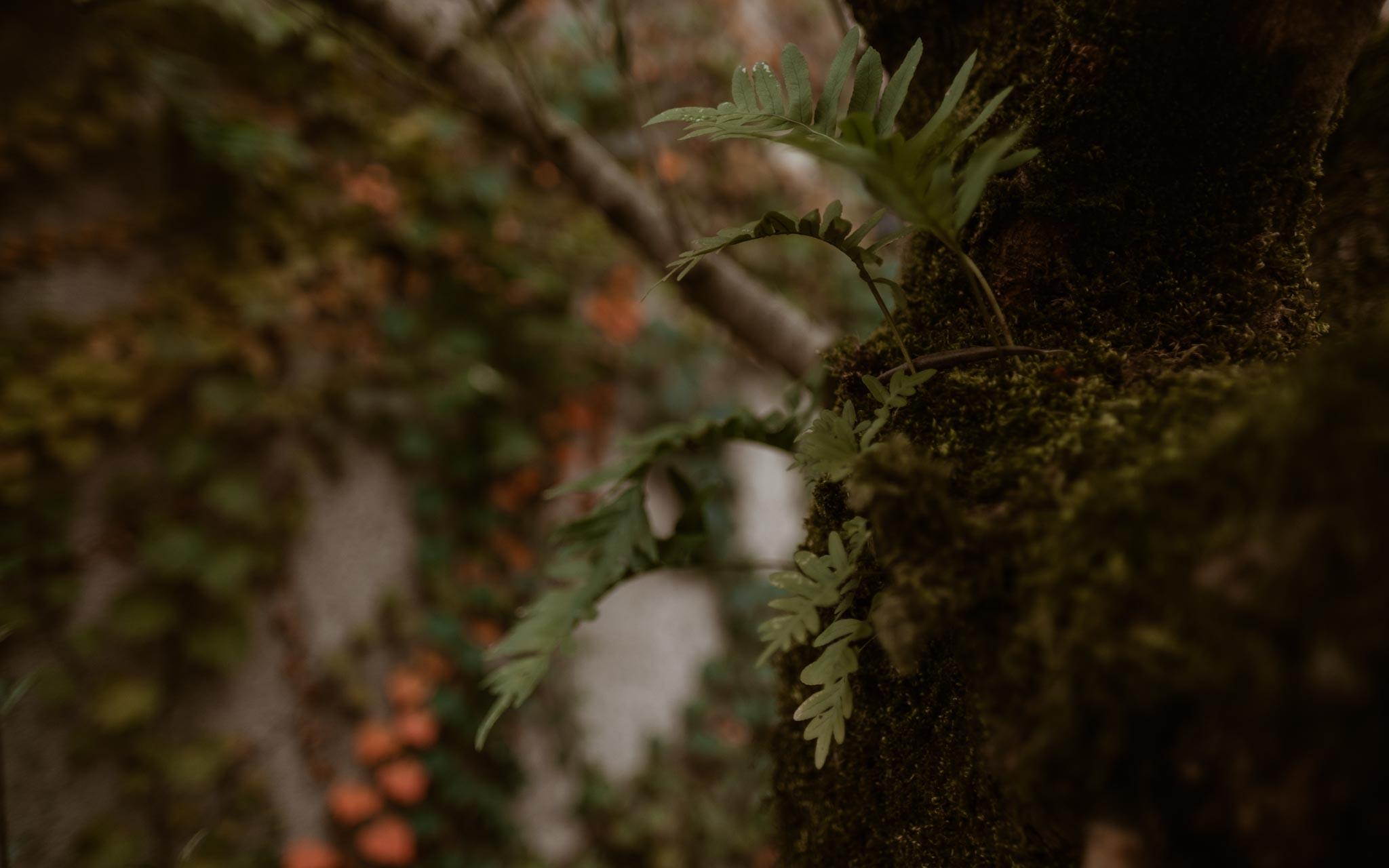Séance photo de grossesse et futurs parents en extérieur, à l'ambiance poétique, en forêt près de Clisson par Geoffrey Arnoldy photographe